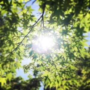 夏の日射し
